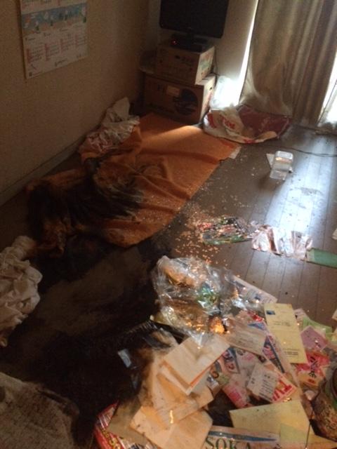 某賃貸アパートの特殊清掃(消臭・消毒)|埼玉県川越市のお客様
