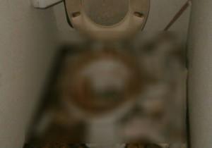 トイレでの特殊清掃